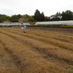 Fall Prepped Rows