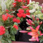 Celosia and Sunset Lilies