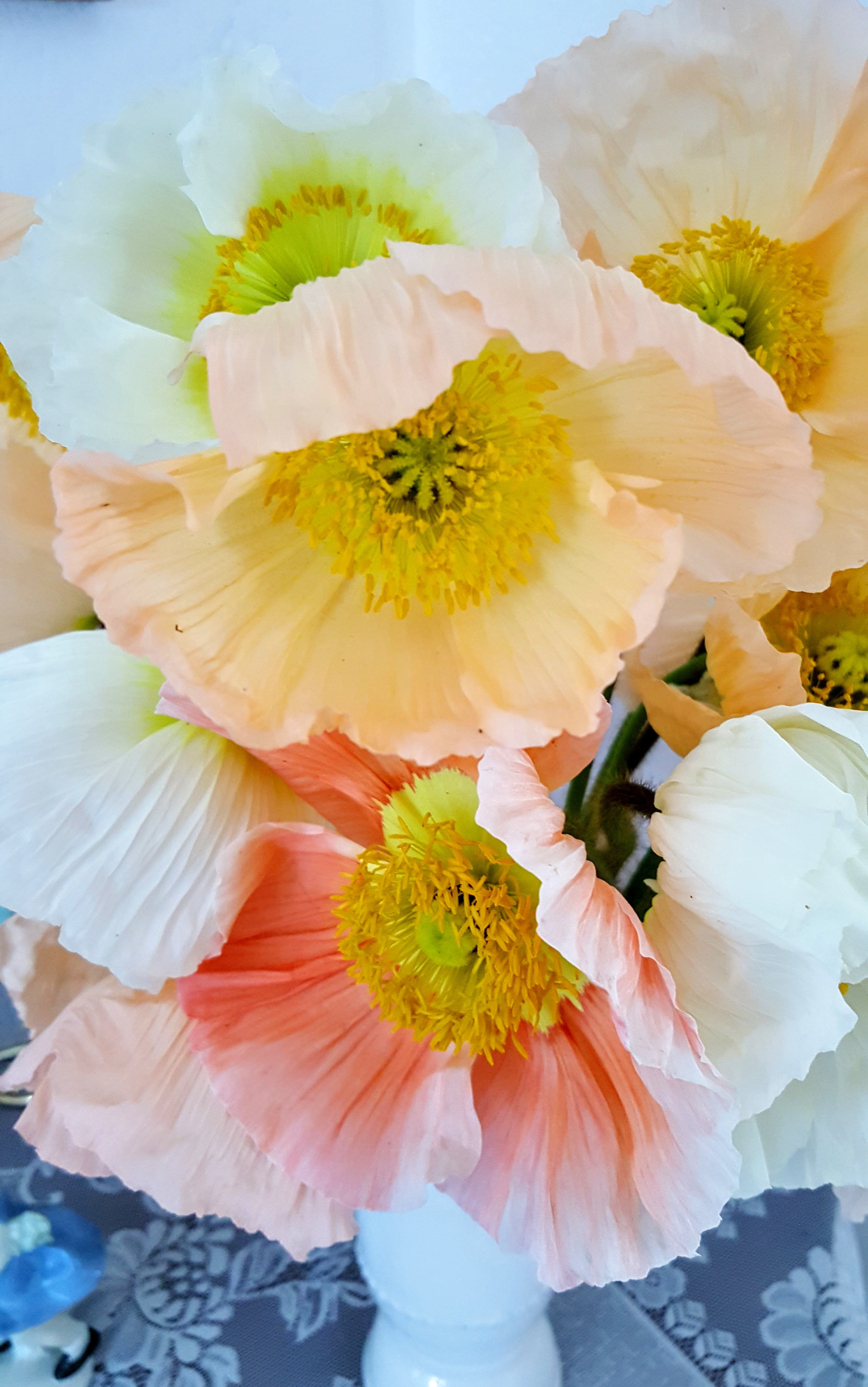 Poppies are finally popping welcome to bare mtn farm they were definitely worth the try effort and wait to get these beauties in to our mix of flowers colibri poppies buycottarizona Images